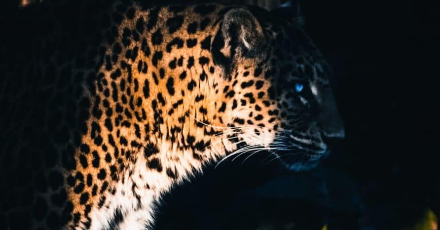 Yggdrasil Partners ReelPlay vabastab Jaguari superteed Bad Dingost